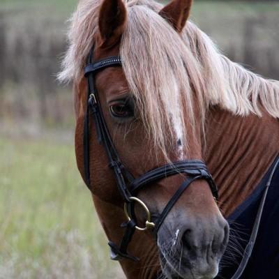 hevoselle neliö